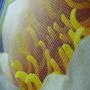 Non Woven Tasche mit Seeblütenmotiv in Nahaufnahme